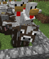 chicken-on-cow.png