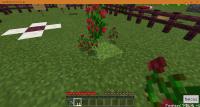 flowerDupe.jpg