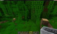 oak in jungle.jpg
