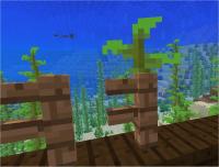 kelp 2.jpg
