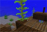 kelp 5.jpg