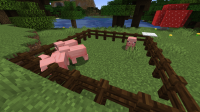 Pigs_1.png