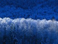 Zima.jpg