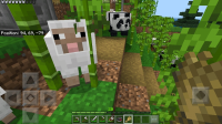 Sheep stuck in Bamboo-2.jpg