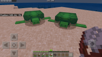 Turtles dont layed eggs.....jpg