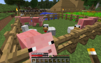 Chickens escaped their area.jpg