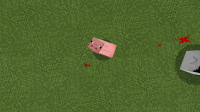 PigLooking.png